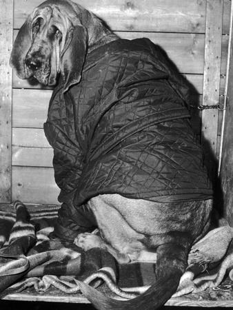 Bloodhound 1969
