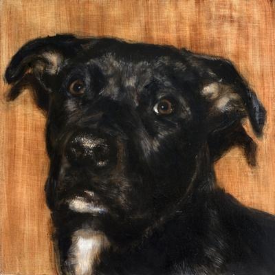 Puppy Dog Eyes I