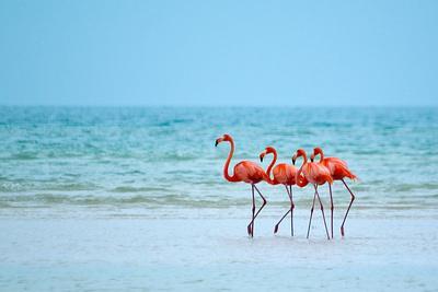 Flamingos and Ocean