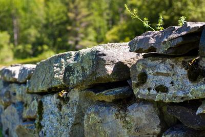 New England Old Stone Wall Photo Print Poster