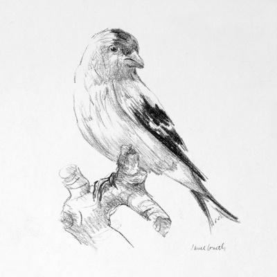Bird Drawing II