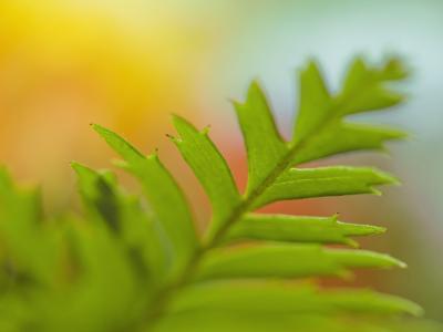 Shallow Focus Leaf