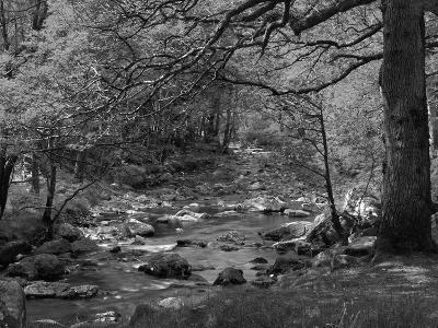 Afon Artro Passing Through Natural Oak Wood, Llanbedr, Gwynedd, Wales, United Kingdom, Europe