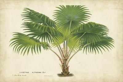 Palm of the Tropics V