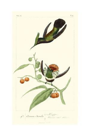 Lemaire Hummingbirds III