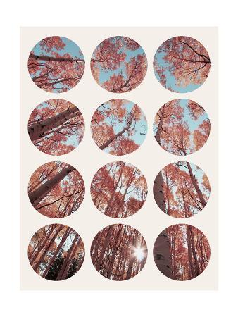 Inspirational Circle Design - Autumn Trees