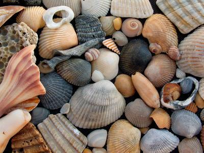 Shells on Edisto Beach, Edisto Beach State Park, South Carolina, USA