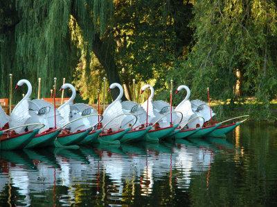 Swan Boats in Public Garden, Boston, Massachusetts