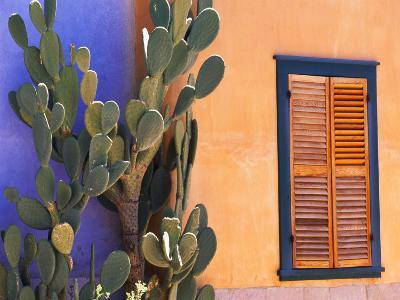 Southwestern Cactus and Window, Tucson, Arizona, USA