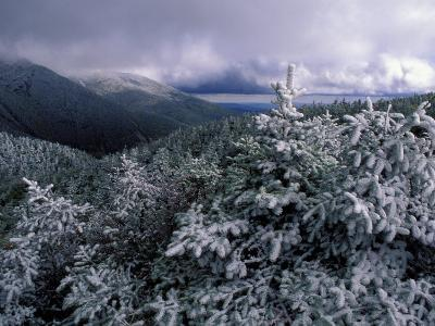 Snow Coats the Boreal Forest on Mt. Lafayette, White Mountains, New Hampshire, USA