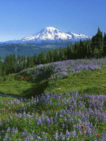 Mt. Rainer in distance, Meadows, Adams Wilderness, Mt, Washington, USA