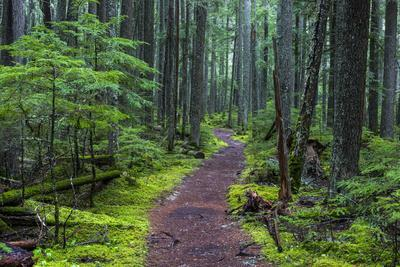 Hiking Path Winds Through Mossy Rainforest in Glacier National Park, Montana, USA