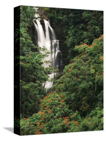 Nanue Falls, Alexandra Palms and African Tulip Trees, Hawaii, USA