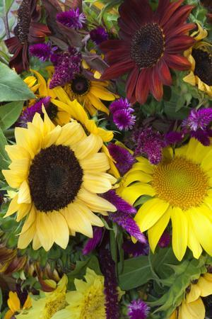 Bouquet of Colorful Sunflowers at Market, Savannah, Georgia, USA