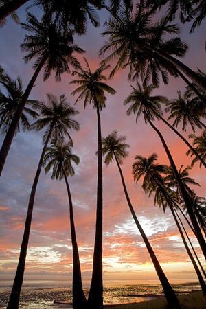 Palm Trees, Royal Kamehameha Coconut Palm Grove, Molokai, Hawaii, USA