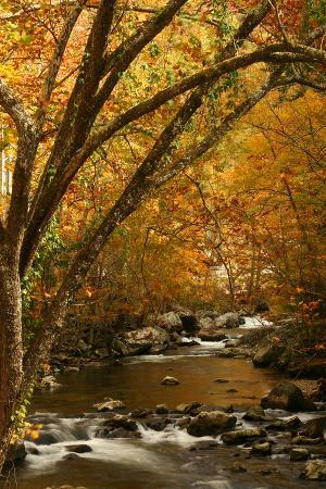 Mountain creek with fall colors, Smoky Mountains, Tennessee
