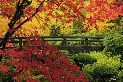 Moon Bridge in Autumn, Portland Japanese Garden, Portland, Oregon, USA