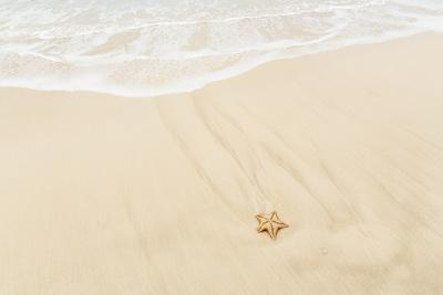 Caribbean, Anguilla. Starfish Sitting on Beach as Tide Comes In