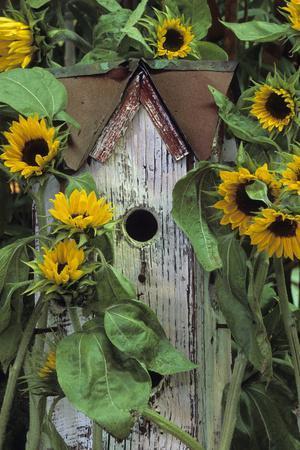 USA, Pennsylvania. Birdhouse and Garden Sunflowers