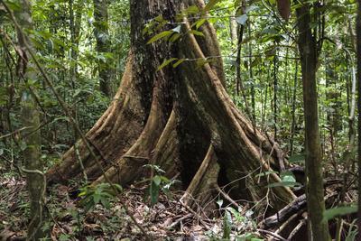 Trinidad. Close-Up of Tree Trunk at Asa Wright Nature Centre