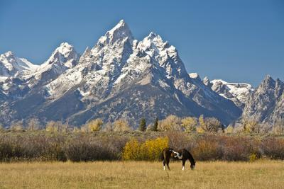 Horse and Grand Tetons, Moose Head Ranch, Grand Teton National Park, Wyoming, USA