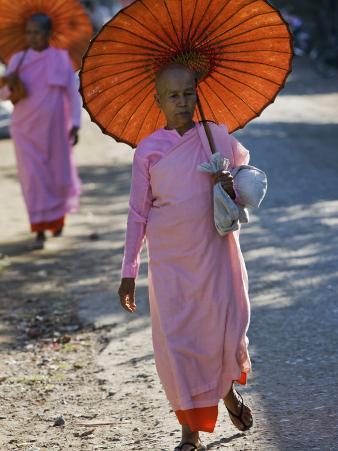 Buddhist Nuns with Bamboo-Framed Orange Umbrellas Walk Through Streets of Sittwe, Burma, Myanmar