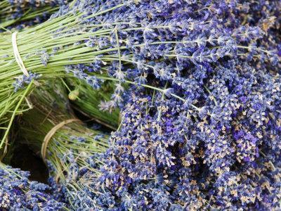 Lavender Bundles for Sale in Roussillon, Sault, Provence, France