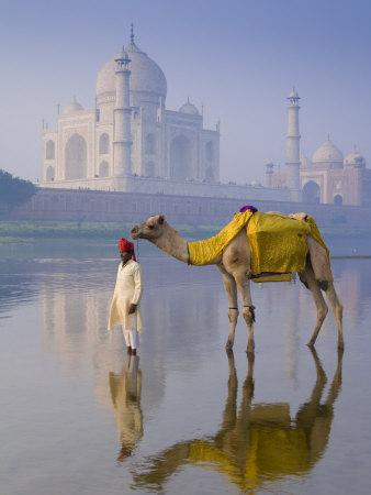 Camal and Driver, Taj Mahal, Agra, Uttar Pradesh, India