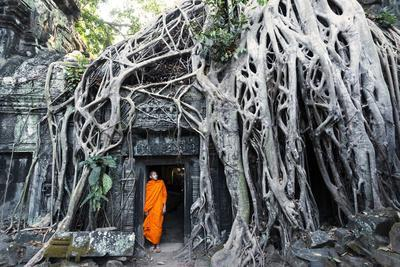 Cambodia, Siem Reap, Angkor Wat Complex. Buddhist Monk Inside Ta Prohm Temple (Mr)