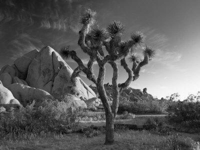 California, Joshua Tree National Park, USA
