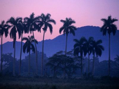 Palm Trees at Yumuri Valley at Sunset, Matanzas, Cuba