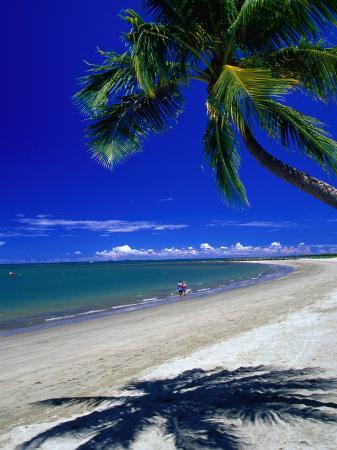 Palm Tree on Beach, Fiji