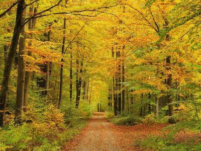 Forest in Autumn, Schoenbuch, Baden-Wurttemberg, Germany, Europe