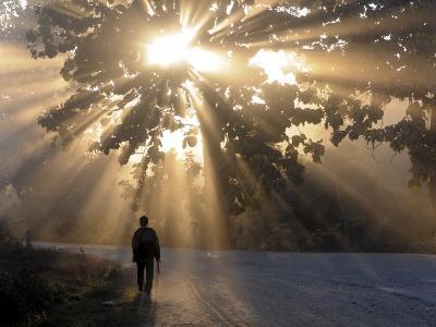 Man Walking Along a Street with Sun Rays Shining Through a Tree, Highlands, Myanmar