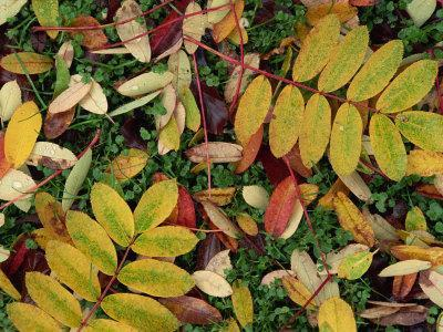 Overhead View of Autumn Leaves on the Ground