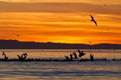 Sunrise, Isla Rasa, Gulf of California (Sea of Cortez), Baja California, Mexico, North America