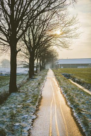 The Oude Trambaan Tree Lined Cycle Path, Rijsbergen, North Brabant, The Netherlands (Holland)