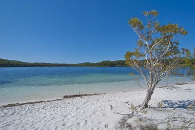 Mckenzie Lake, Fraser Island, UNESCO World Heritage Site, Queensland, Australia, Pacific