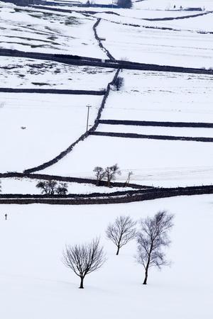 Winter Fields Near Burnsall, Yorkshire, England, United Kingdom, Europe