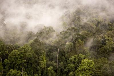 Rain Mist Rising from the Forest Canopy in Danum Valley