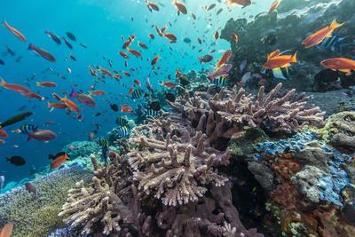 A Profusion of Coral and Reef Fish on Batu Bolong, Komodo Island National Park, Indonesia