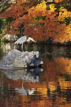 Heron on Lake in Autumn, Eikan-Do Temple, Northern Higashiyama, Kyoto, Japan
