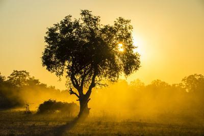 Dust in Backlight at Sunset, South Luangwa National Park, Zambia, Africa