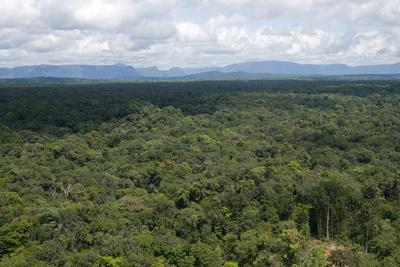 Aerial View over the Rainforest of Guyana, South America