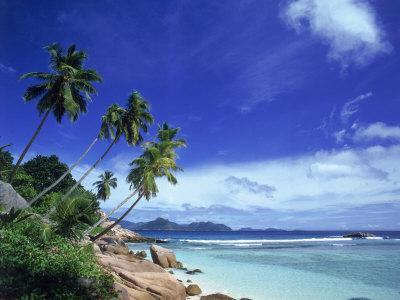 Palm Trees and Ocean, La Digue, Seychelles