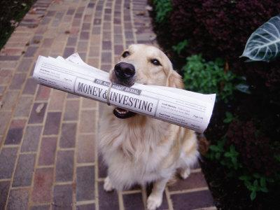 Golden Retriever with Newspaper in its Mouth