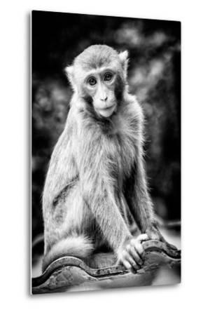 China 10MKm2 Collection - Monkey Portrait