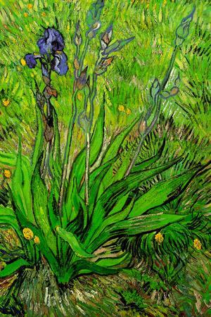 Vincent van Gogh The Iris