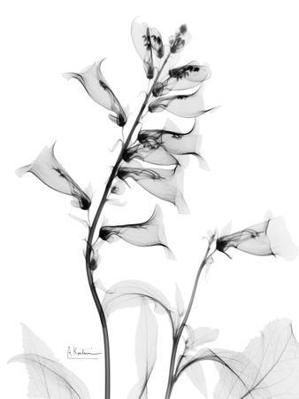 Foxglove Gray