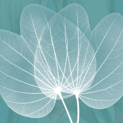 Teal Orchid Xray